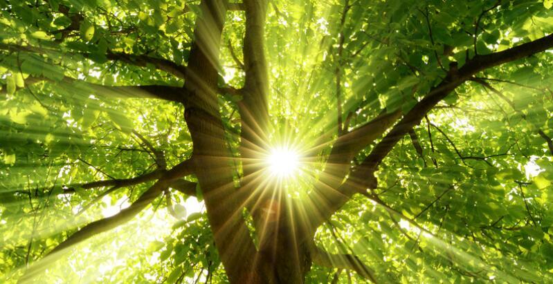 阳光的优美句子 描写阳光的句子或段落
