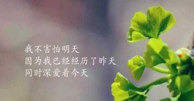 午安正能量一句话心语 问候午安的句子文字