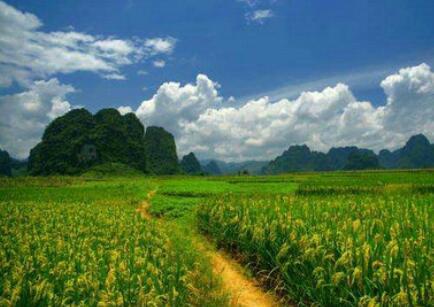 描写乡间的优美句子 描写农村家乡美景的句子