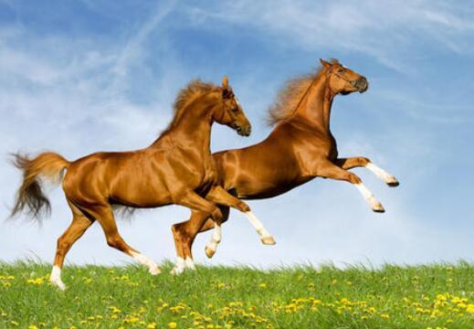 赞美马的诗句 关于马的诗句励志诗句