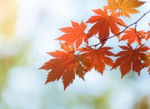 秋天的伤感唯美句子 关于秋天伤感爱情的句子