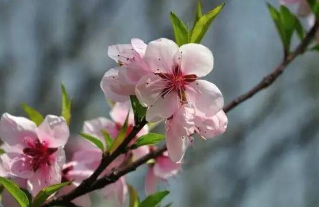 春意盎然优美的句子 描写春意盎然的美句