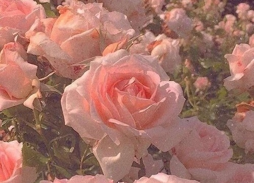 心碎的爱情句子古风 古风美到心痛的句子