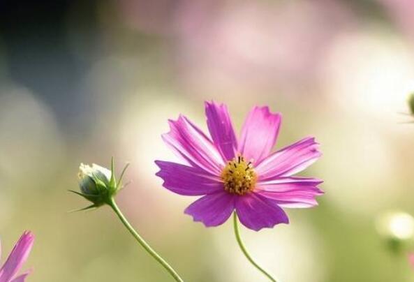 有关春天花的优美句子 形容春天花美的句子