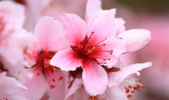 描述鲜花优美的句子 描写鲜花开放的好段