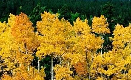古风秋天句子 唯美的关于秋天的古文