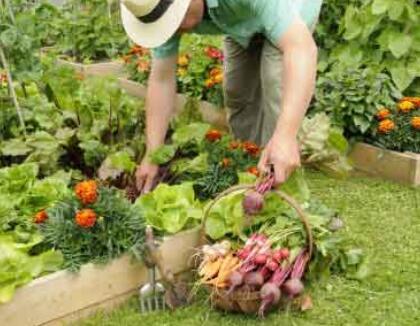 形容菜园优美绿的句子 描写秋天的菜园的段落