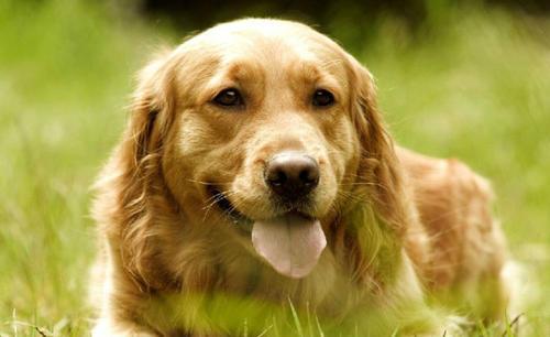 养狗最感动的十句话 表达对宠物的爱句子