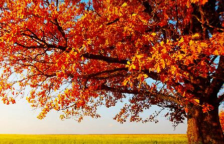 关于树木的哲理句子 关于树的人生哲理的句子