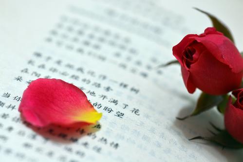 关于玫瑰花的唯美句子