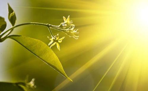 关于阳光的唯美句子