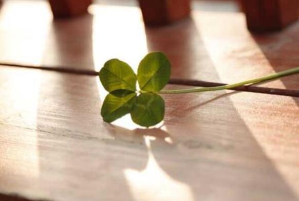 关于幸运的优美句子 关于幸运的句子