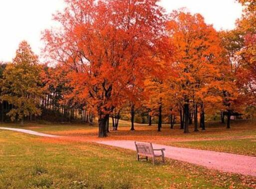 秋天优美伤感的句子 描写秋天伤感的句子
