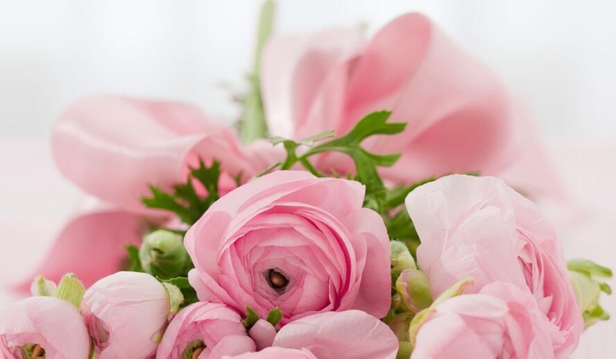 和玫瑰有关的唯美句子 和玫瑰有关的句子
