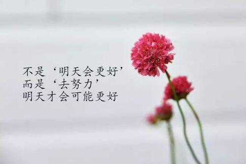 优美句子摘抄 一眼就爱上的文案短句