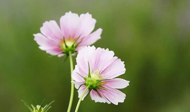 愿你像春天的祝福语