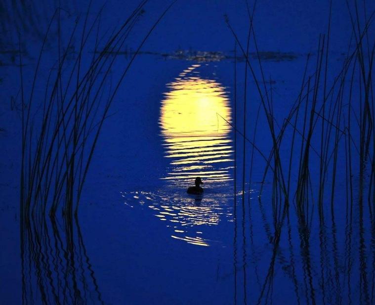 关于十五月亮的诗句唯美