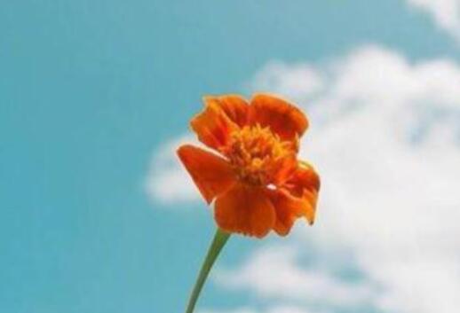 花的绽放励志句子