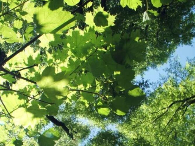 关于植树节的诗句古诗