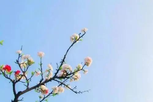描写春天阳光温暖的句子