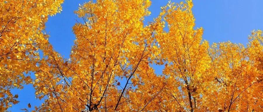 描写秋天的句子8个字
