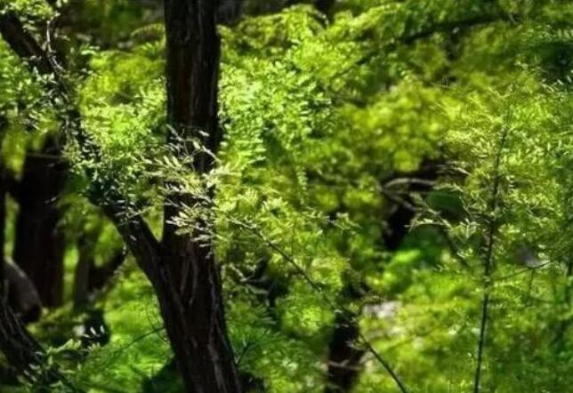 描写植树节的诗歌