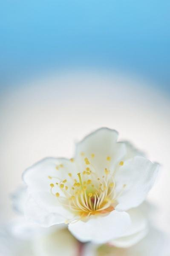 佛教唯美诗句