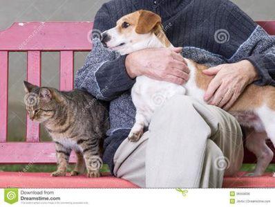 把人比喻狗的句子损人 形容人像狗一样的骂人话