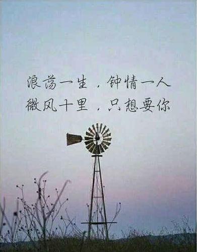 只钟情于一个人的句子 表示只钟情于一人的句子有哪些