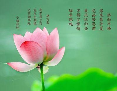 用花形容爱情的诗句 有关花的美好爱情诗句