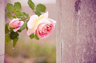 爱情带花的短句 有关花的爱情句子