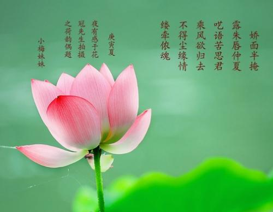 用花来表达爱意的诗句 表达爱意的花的诗句