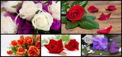 关于玫瑰花的爱情句子 描写玫瑰花的优美句子有哪些?