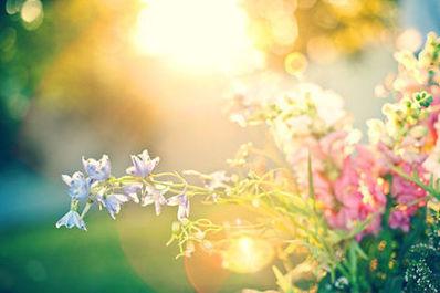 阳光静好岁月唯美句子 关于'岁月静好,流年无殇。'的唯美句子