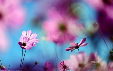 花开绽放唯美句子 求关于花的唯美句子