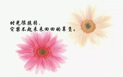 花朵绽放的哲理句子 关于花的优美哲理句子有哪些?
