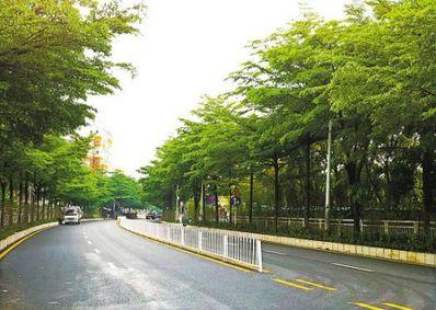 描写道路两旁树的句子