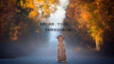 暗示要离开唯美句子 暗示让别人离开自己的句子