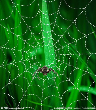 描写蜘蛛网诗句 描写蜘蛛网的诗句