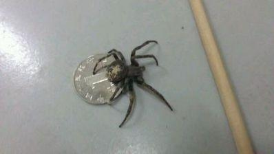 赞美蜘蛛结网的名言 赞美蜘蛛结网的精神的名言有哪些?