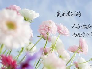 花绽放的优美句子 关于花的优美哲理句子有哪些?