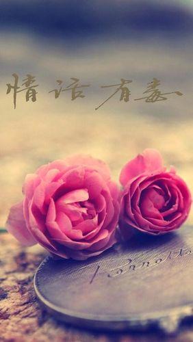 关于花的文艺唯美句子 关于花的唯美句子