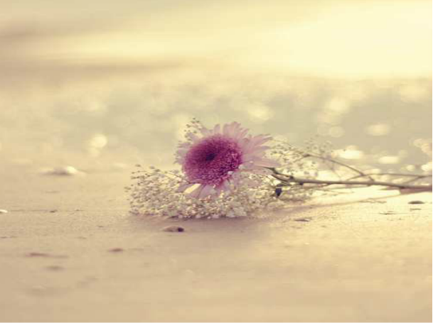 感觉温暖的唯美句子 形容一个人很温暖的唯美句子有什么?
