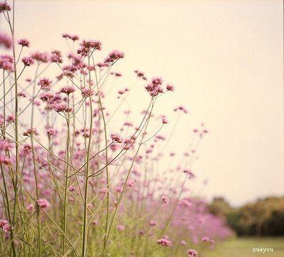 用花表达人生感悟 桂花雨里的遥念表达了什么人生感悟