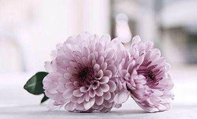 形容花和人的唯美句子 关于花的唯美句子