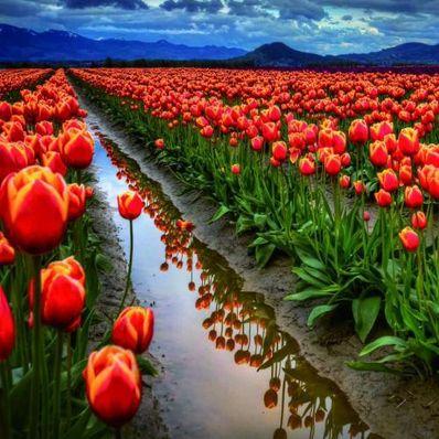 优美风景唯美句子 形容山水风景优美的语句