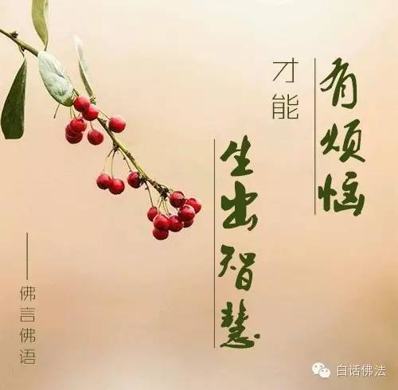 佛语莲花的句子 与莲花有关的佛语都有哪些?