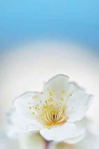 关于佛唯美的诗句