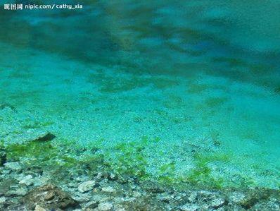 形容水清澈见底的句子 关于水清澈见底的诗句