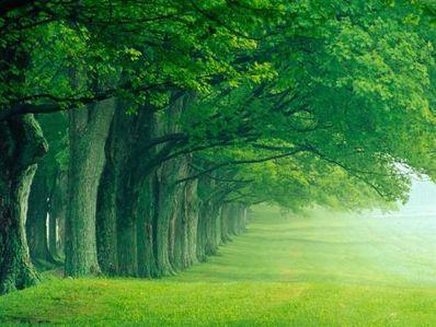 形容森林唯美短语